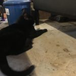 黒猫は幸運の猫